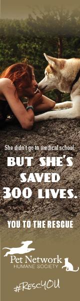 Pet adoption web banner